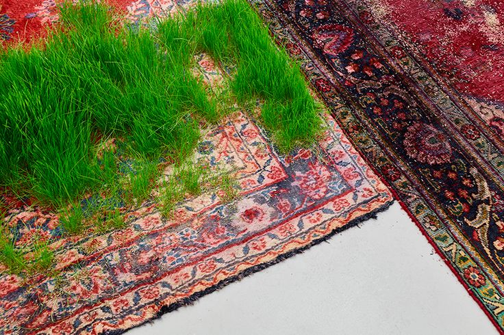 persian rugs sprout patches of greenery for martin roth's living installation