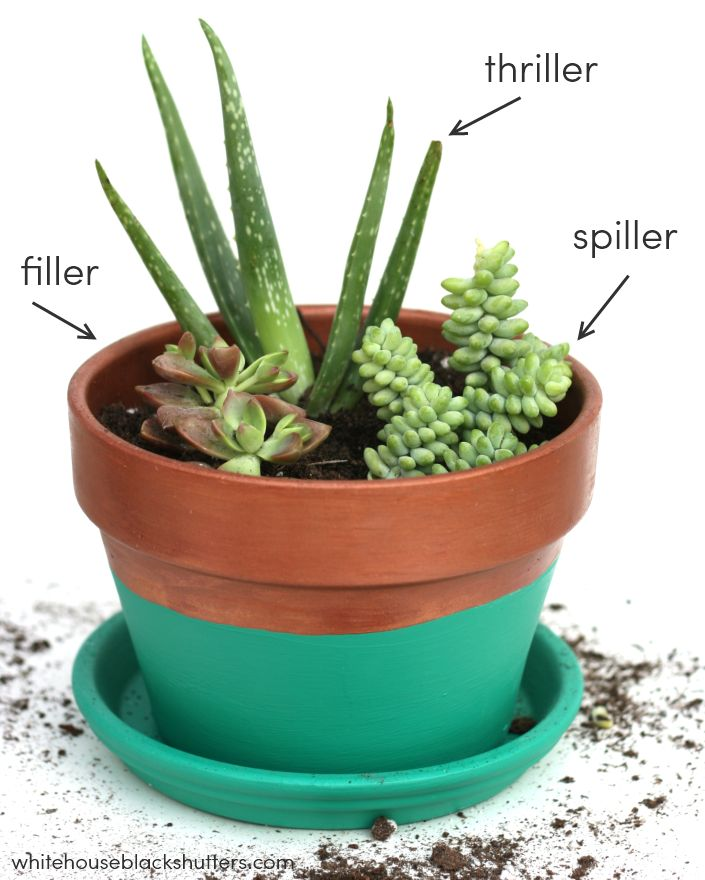25 best ideas about succulent planters on pinterest for How to make an indoor succulent garden