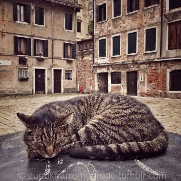 """zuraikaarromenredo: """"The king of the campiello. Zuraika Arromen Redo,  {campiello: typical little Venetian square} """""""