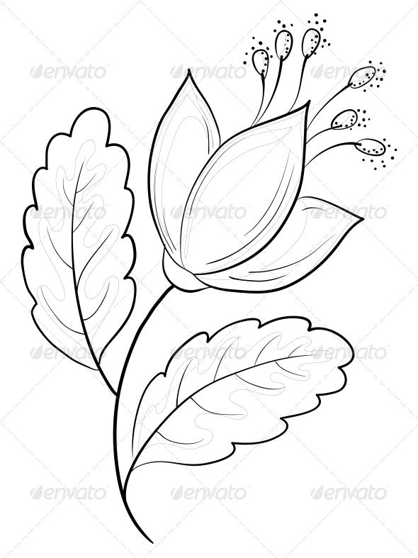Abstract Flower Contours Flowers Plants Nature