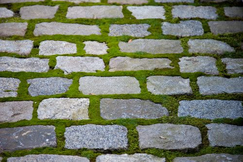 Ahhh ... just think how different this path would feel if it were solid stone. This planted cobblestone surface is beautiful and permeable.