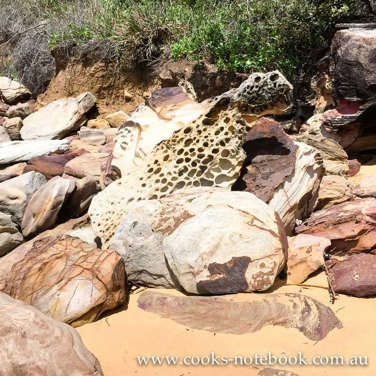Is there a leopard in these rocks? Killcare beach
