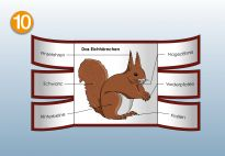 Flip-Flap for the Squirrel Lapbook for children. More lapbook resources available at www.kigaportal.com!
