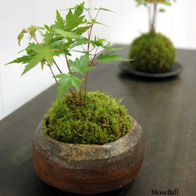 Ikebana beautiful pot with moss