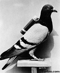Reuter fundó en 1850 la Agencia de noticias Reuter en Aquisgrán para transmitir mensajes entre Bruselas y Aquisgrán, empleando palomas mensajeras. Con esta conexión se unía completamente Berlín y París. La transmisión a través de palomas era mucho más rápida que el correo ferroviario, dando acceso más rápido a Reuter a las noticias. En 1851 el correo a través de palomas fue sustituido por una conexión telegráfica.#pigeonpost #palomamensajera #reuter #comunicación