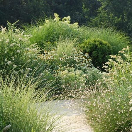 """from High Meadow farms-- use some of theirs: mixed fountain grasses plus pee gee hydrangea, white echinacea (""""White Swan""""), plus possibly some oak leaf or Annabelle, plus possibly low white carpet rose. Maybe add Icicle White Veronica or similar. Do Russian sage and grasses near steps."""