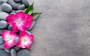 Обои цветы, камни, цветок, орхидея, спа, камни, дзен