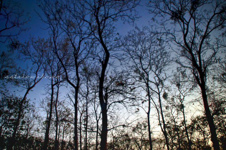 Landscape : Nganjuk