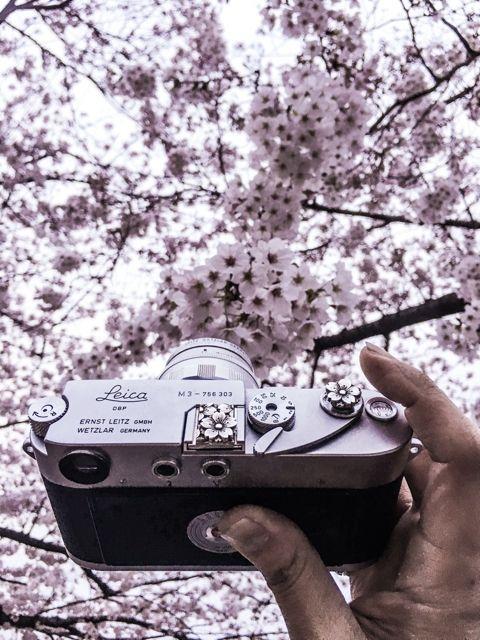 Sakura, Sakura, Sakura… and more Sakura Leica (((o(*゚▽゚*)o)))Handcrafted by Jay Tsujimurahttp://www.shopjay.com/products