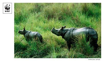 Pic of the Week: Indian rhinoceros in Nepal  #DidyYouKnow 3rd March 2014 is World Wildlife Day! It's a day that will recognize the huge importance of wildlife, particularly those endangered and threatened.