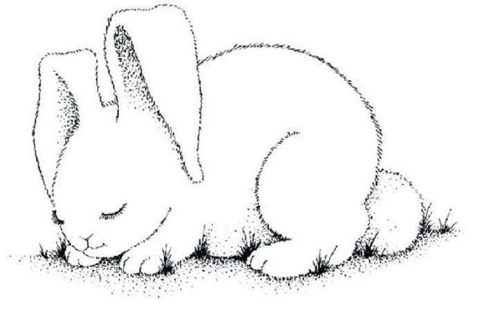 Realistic Bunny Coloring Pages Bunny Coloring Pages Coloring Pages My Little Pony Coloring