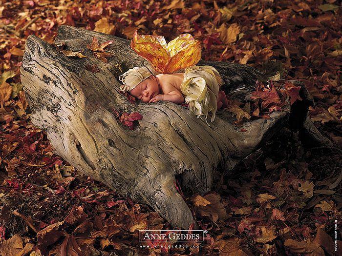 Anne Geddes Baby Photos  - Autumn Fairy Baby  5