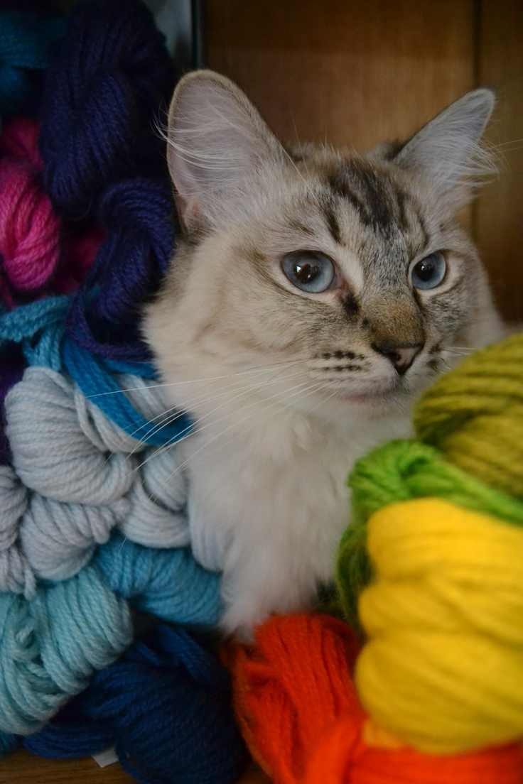 Cat & Yarns
