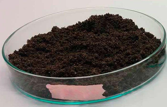 Необычный способ определения кислотности почвы