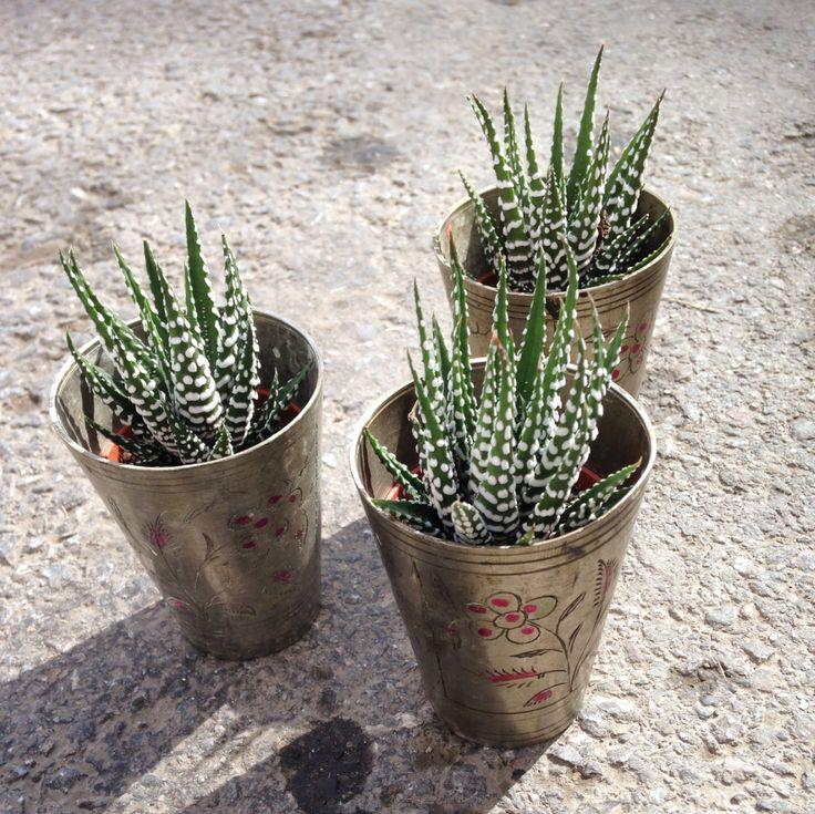 cactus, cacti, antique glass, florist