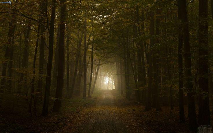 Fond d'écran avec une épaisse forêt brumeuse
