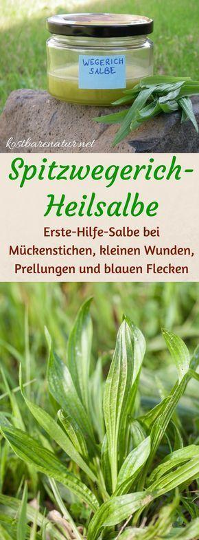 Spitzwegerich gehört zu den wirksamsten Heilpflanzen bei Insektenstichen und Hautirritationen. Nutze seine Kräfte in einer hausgemachten Salbe!