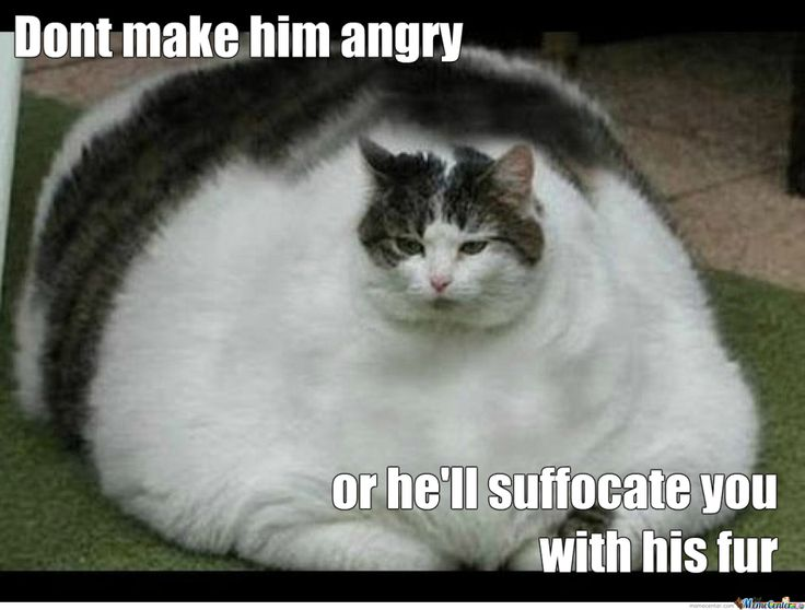 funny fat cat pictures with captions | Funny Pictures ...