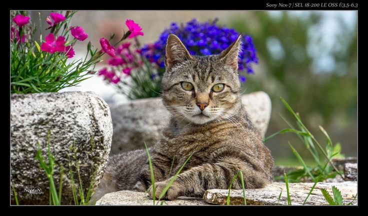 Migoo Le Chat | Sony Nex7 by NeptuN™  on 500px