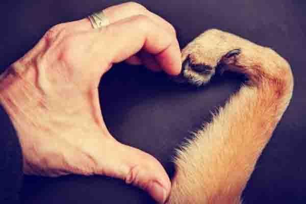 Amor entre dueño y perro
