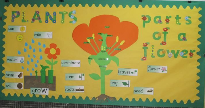 Parts of a plant classroom display photo from Almudena.
