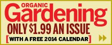 Over 60 of The Most Fragrant Flowers, Trees, Shrubs and Vines for Your Garden: Organic Gardening