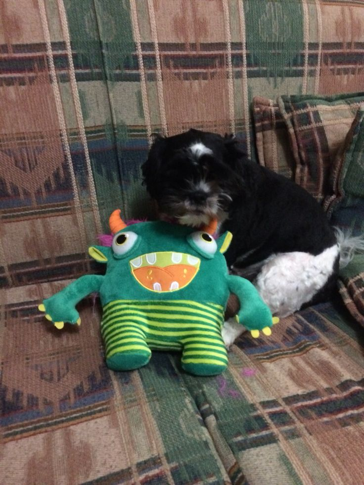 Toby's new toy