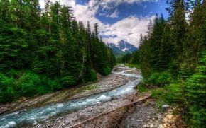 Parque Nacional do Monte Rainier, rio, Montanhas, árvores, paisagem