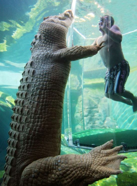 Crocodile Cage Of Death - aquarium in Darwin, Australia.