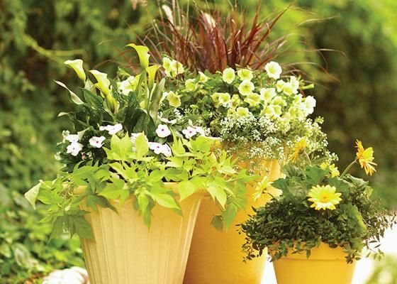 No space? No problem. Plant a container garden for flashes of portable color on a porch, deck, or patio. Click through for some handy container gardening tips.