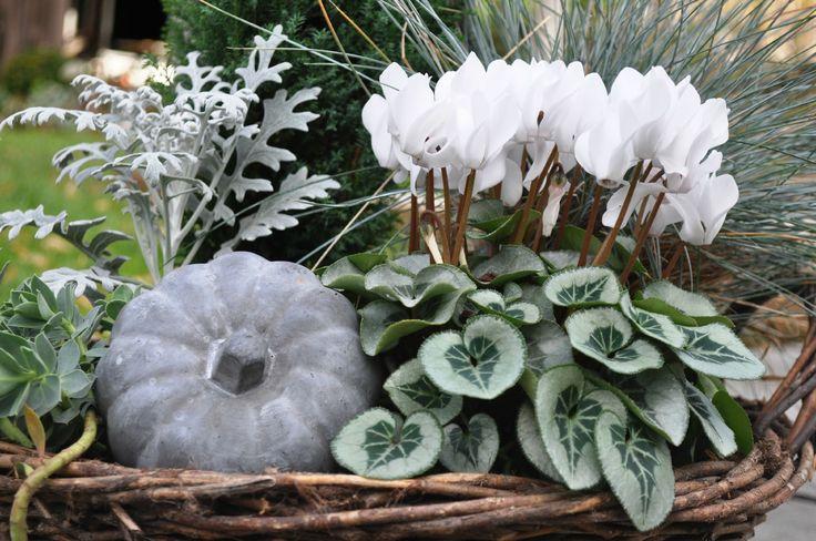"""Résultat de recherche d'images pour """"jardiniere automne ton blanc pourpre"""""""