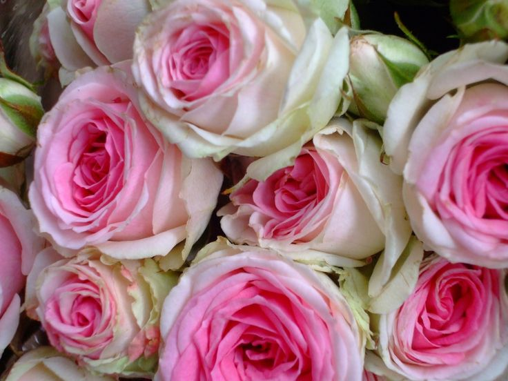 Pink rose bouquet pink rose bouquet free stock photo hd - Bouquet of red roses hd images ...