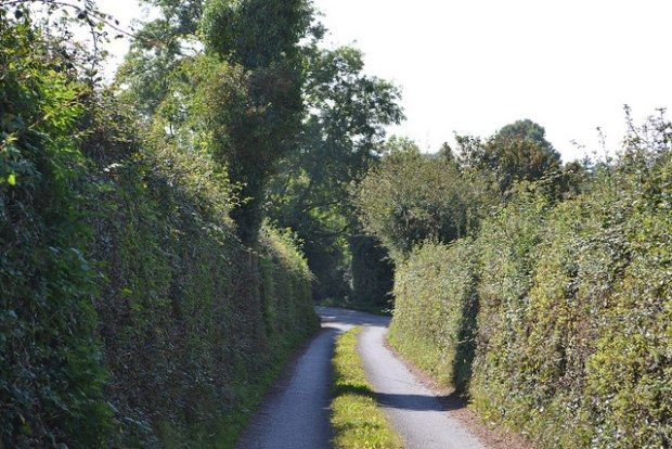 A lone country lane in Co. Tipperary, Ireland.