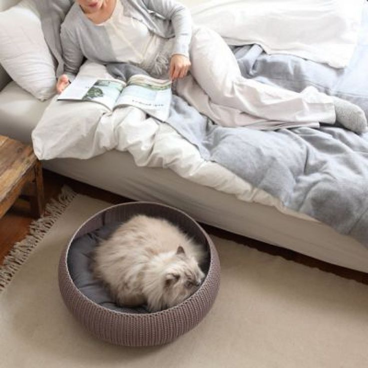 Trendy Dog Beds