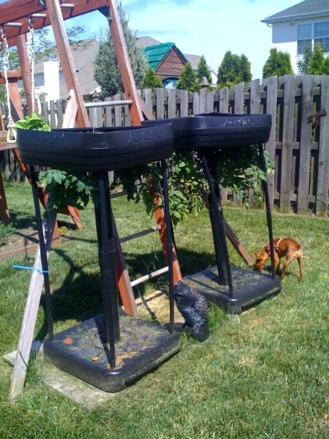 25+ best ideas about Upside down tomato planter on