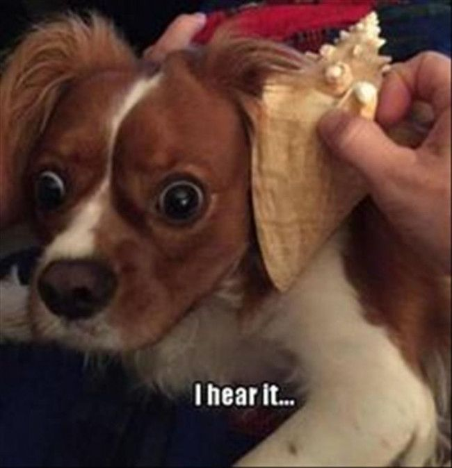 Very interesting post: 36 Funny Pics of Dogs. Also dompiсt.сom lot of interesting things on Funny Dog.