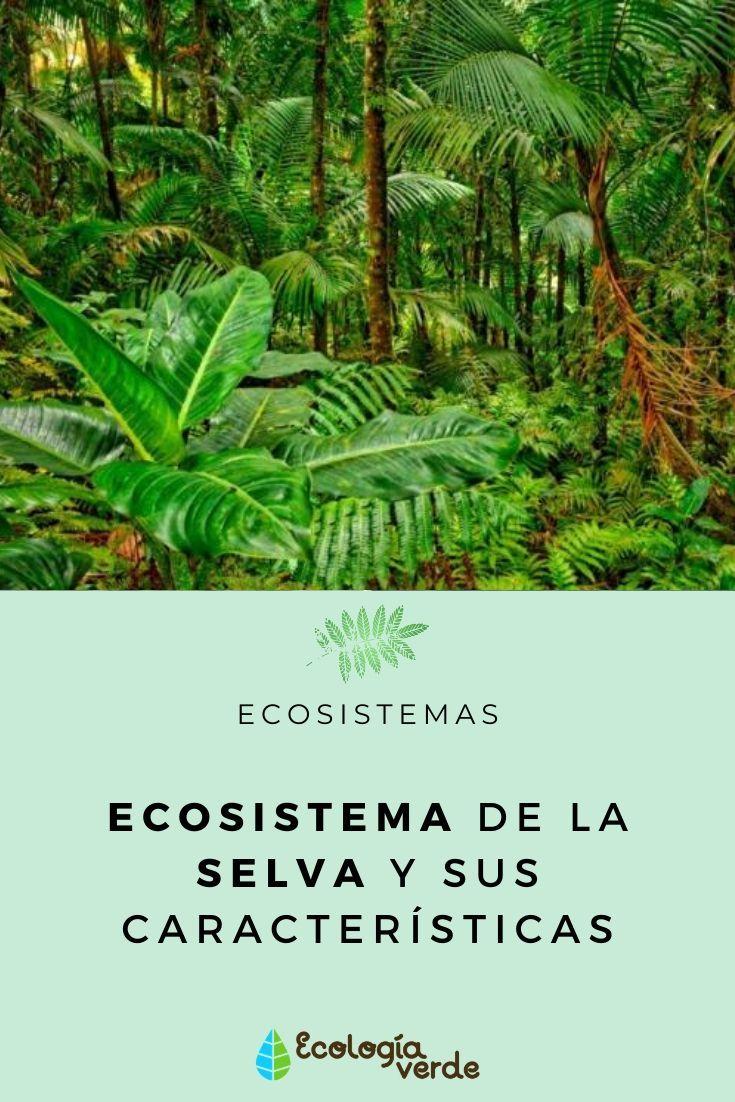 Ecosistema De La Selva Y Sus Características Ecosistema Selva Ecosistemas Flora De La Selva