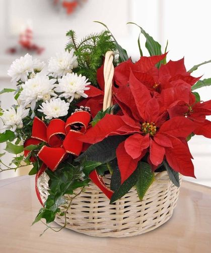 Poinsettia Garden Basket: For the green thumb enthusiast, send our garden basket filled with a lovely poinsettia and other garden plants.