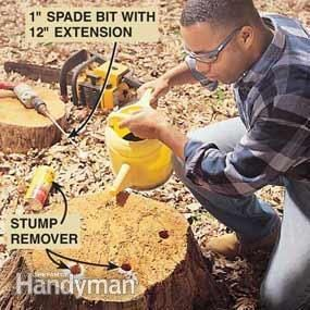 Use potassium nitrate stump remover to decompose old stumps.