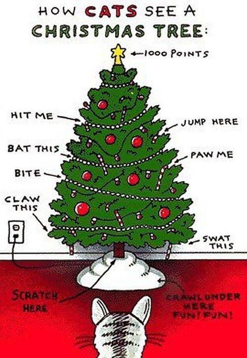 fd112e1b8595e35936fa03146aaff7b6--christmas-trees-christmas-cats.jpg (497×720)