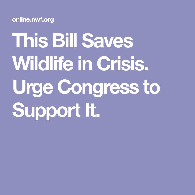 This Bill Saves Wildlife in Crisis. Urge Congress to Support It.