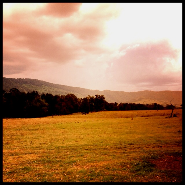 Beautiful Hunter Valley countryside