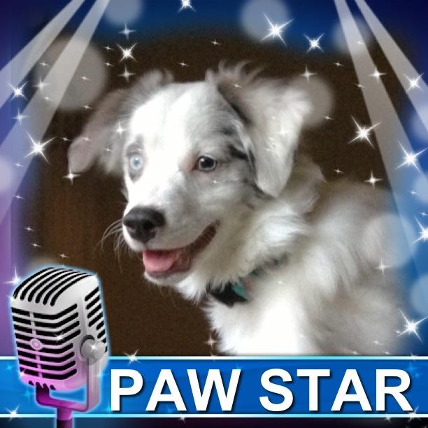 Paw Star