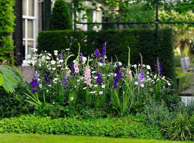 Na Tej Rabacie Kroluja Mieczyki Milka Purple Flora Mon Amour I Adrenalin Oraz Biale Zawilce Japonskie Garden Inspiration Garden Design Cottage Garden