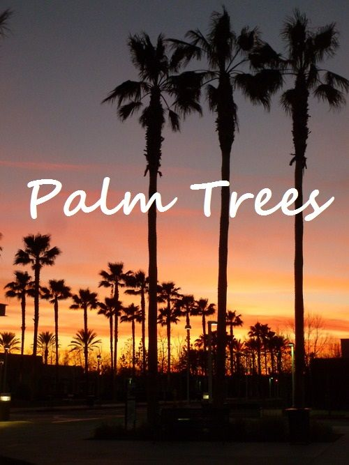 I really love Palm Trees!