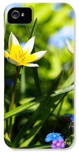 "Sale: ""In The Garden - Tulipa Tarda"" #iPhone and #Galaxy #Cases . All iPhone / Galaxy cases ship out from the production facility within 1 - 2 business days of your order date, and each case comes with a 30-day money-back guarantee."