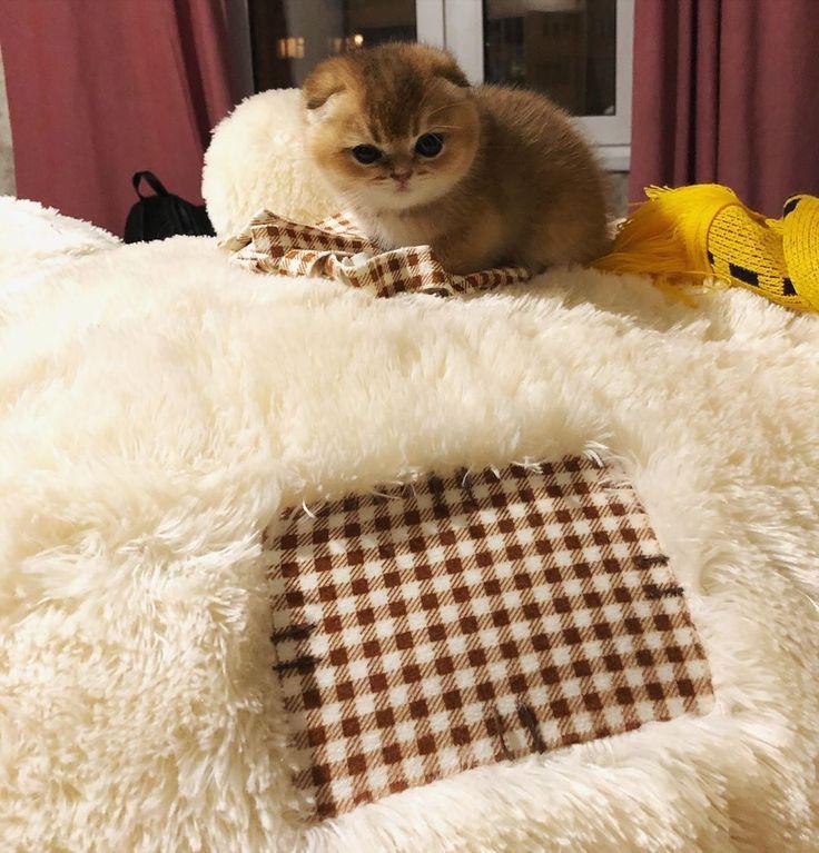 Lovely home #cat #cats #catsofinstagram #instacat #instagramanet