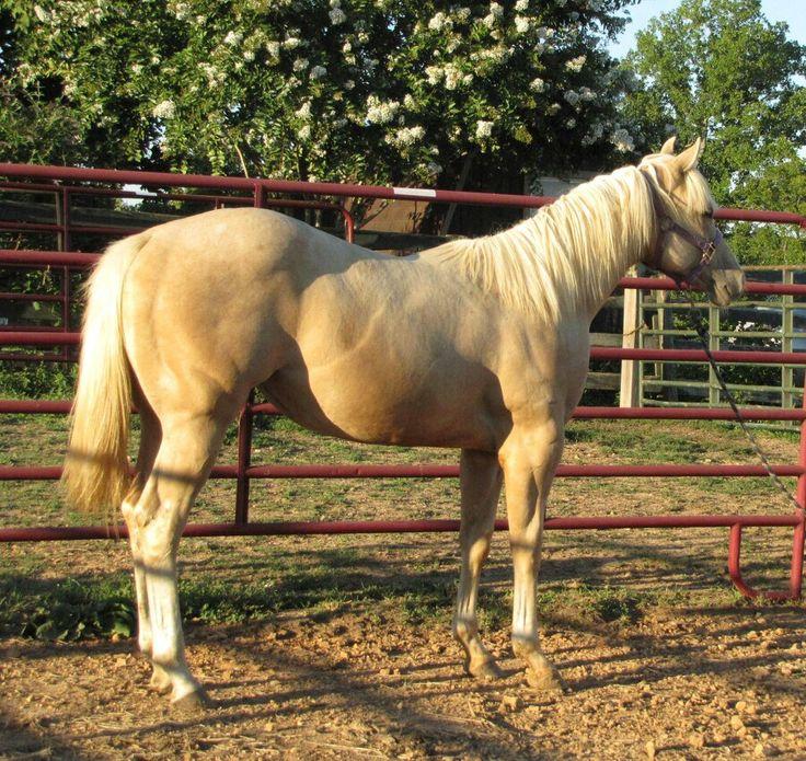 ... el. Durango on Pinterest | Horse racing, Appaloosa horses and Palomino