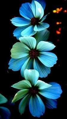 Une superbe hampe florale....