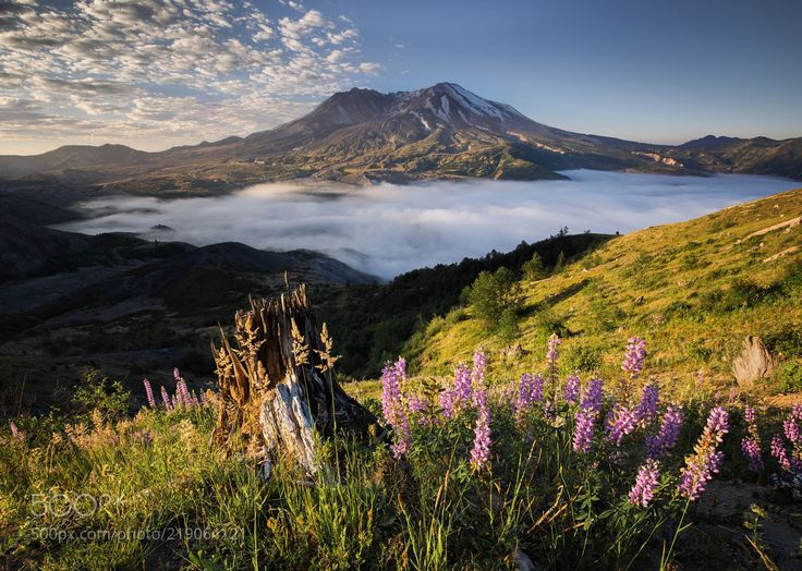 Pure St. Helens (Nathaniel Merz / Daejeon / South Korea) #X-T2 #landscape #photo #nature